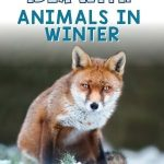 Main idea is one of the toughest skills for kids to grasp, and we even begin with main idea in first grade! This post breaks it down with a gradual release using Animals in Winter. Freebies included.