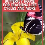The Butterfly House by Eve Bunting is one of my favorite books for spring. The illustrations are just gorgeous. If you are growing butterflies, your students will be able to relate those experiences to this book as it explains the process. This post offers teaching suggestions using this book.